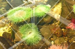 Sehome Hill Arboretum Marine Life Center And Whatcom