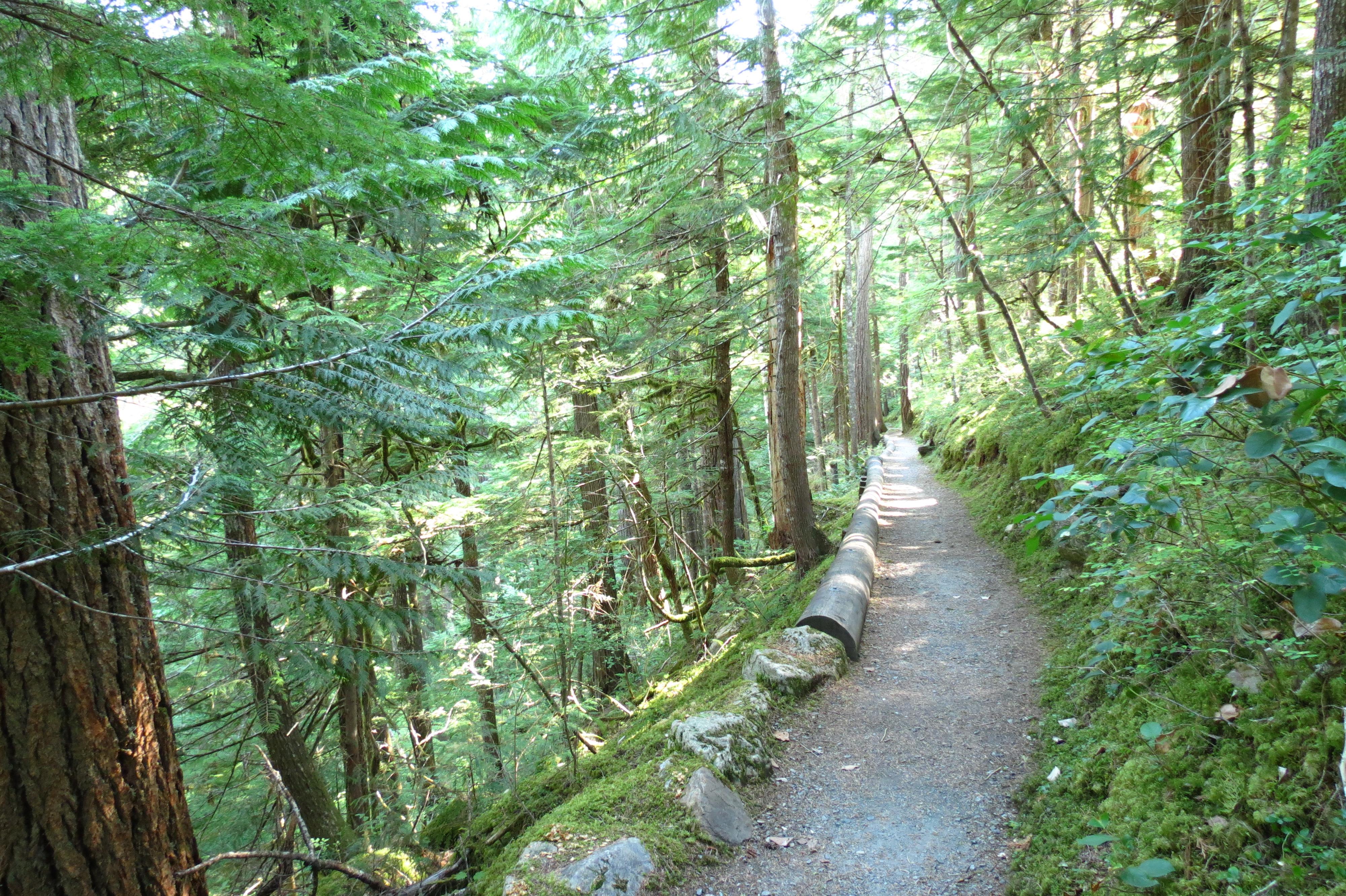 Trail Cedars Newhalem