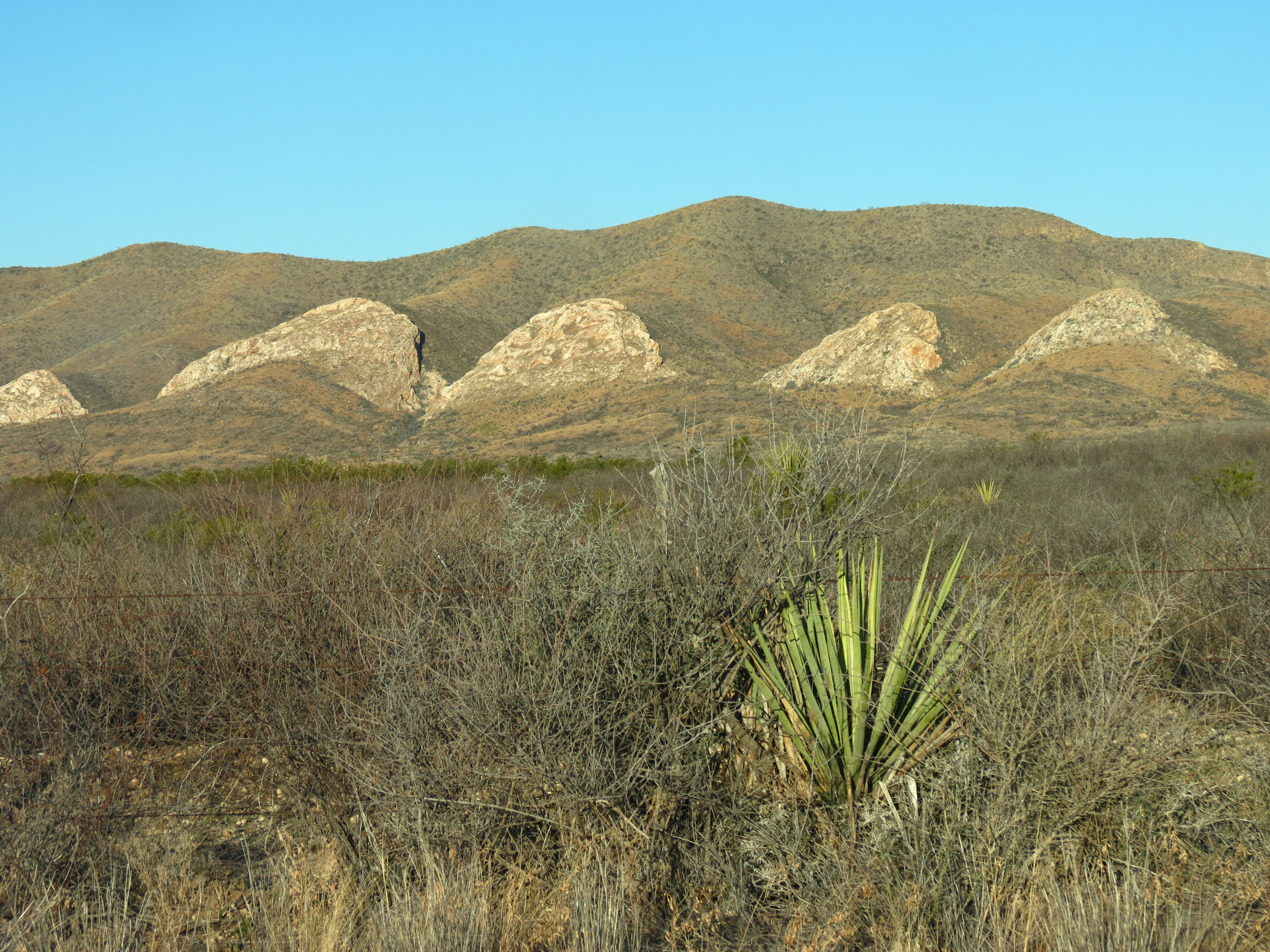 HAPPY VALENTINES DAY at Big Bend National Park | Tiger Tales