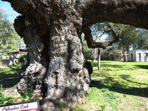 Columbus Historic Homes And 500 Year Old Live Oak Tree