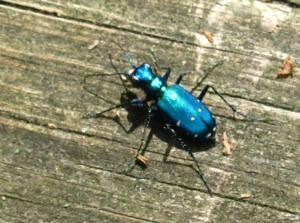 IMG_9237 Bright Bug