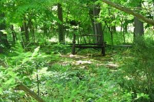 Bench In Woods