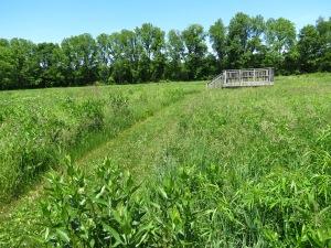 Tall Grass Prairie and Observation Deck