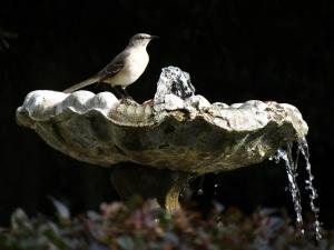 IMG_3989 Mockingbird