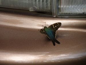 IMG_4012 Butterfly