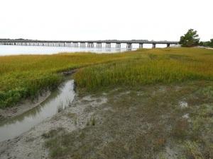 IMG_4153 Salt Marsh