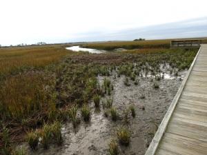 IMG_4172 Into marsh