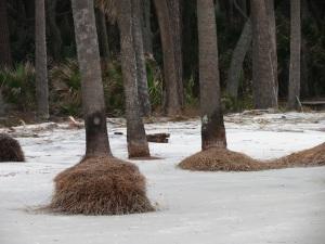 IMG_4223 Beach palms