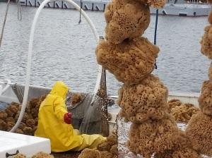 Sponges 3