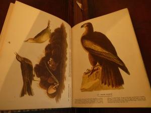 Audubon 10