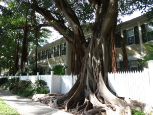 Key West Tree