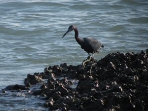 Sombrero Beach 4