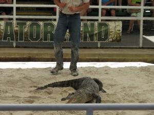Gator 32