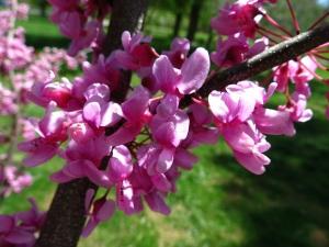 a flower 1