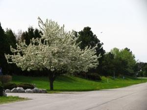 a tree 1