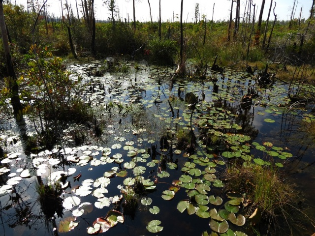 swamp 21
