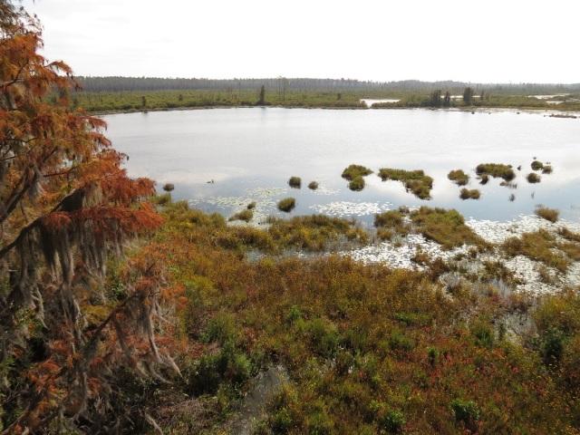 swamp 24
