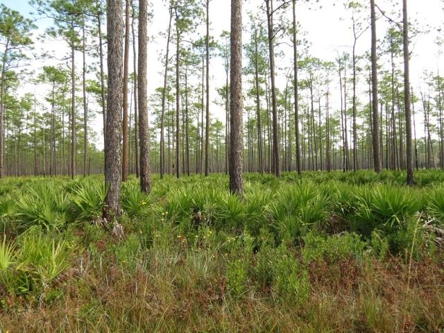 swamp 25