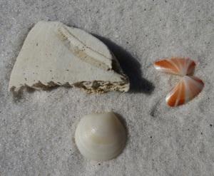 seashore 10