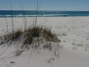 seashore 8