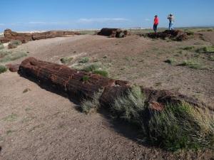 giant logs 1