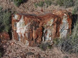 giant logs 2