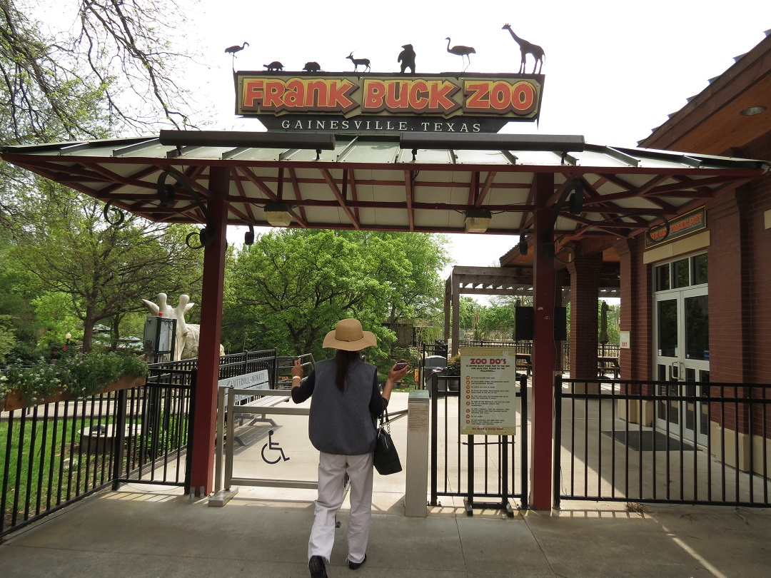Gainesville TX, The Great Hanging, Frank Buck Zoo | Tiger Tales