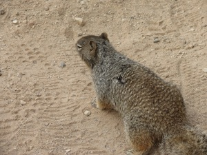 ba 6 curious squirrel note his fur coloring