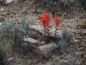 desert flowers 7a