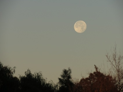 Christmas moon the morning after