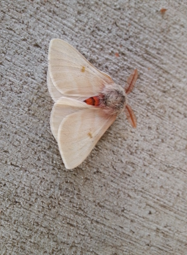 moth-1