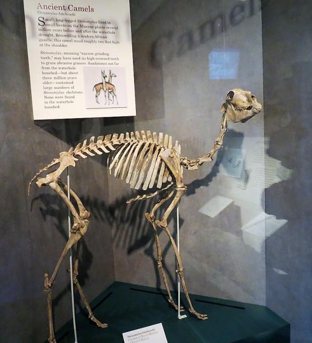 fossils 4